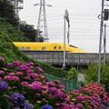 Photos: 180528_21_紫陽花・S18200・α60(矢上川) (21)