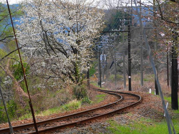 160329_29_桜と線路(家山) (1)