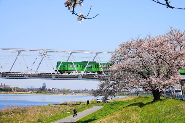 200325_51S_京王相模原と一本桜・RX10M3(稲田堤) (3)