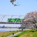 Photos: 200325_51S_京王相模原と一本桜・RX10M3(稲田堤) (3)