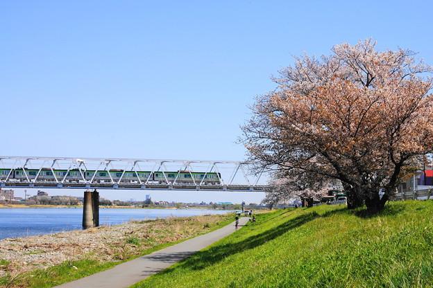 Photos: 200325_49S_一本桜と京王相模原線・RX10M3(稲田堤) (8)