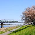 200325_49S_一本桜と京王相模原線・RX10M3(稲田堤) (8)