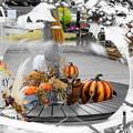 201030_04H_ハロウィン装飾・黒カボチャ・RX10M3近隣) (24-1)