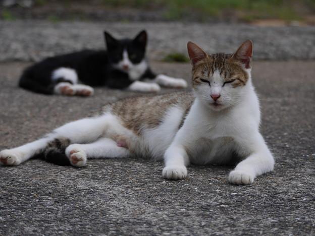 気儘な猫達