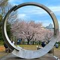 都築中央公園 桜のオブジェ