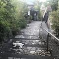 Photos: 猫と坂