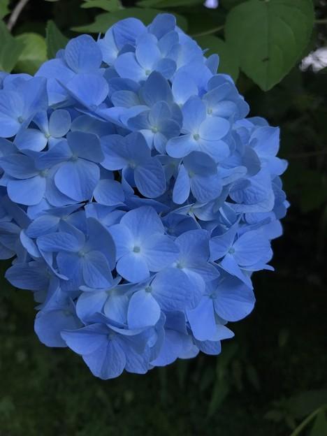 明月ブルー