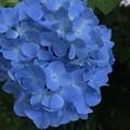 Photos: 明月ブルー