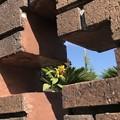 Photos: 塀の中の信仰