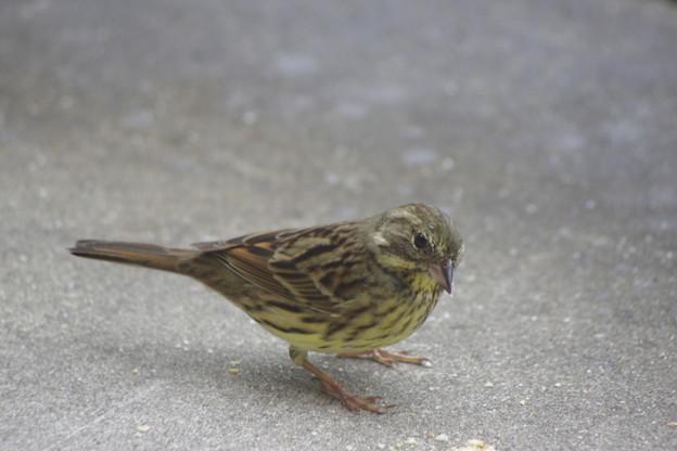 Photos: 小鳥 b