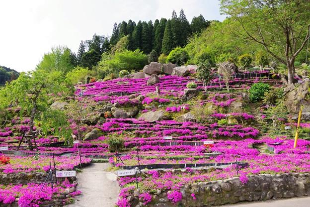 花の森 a