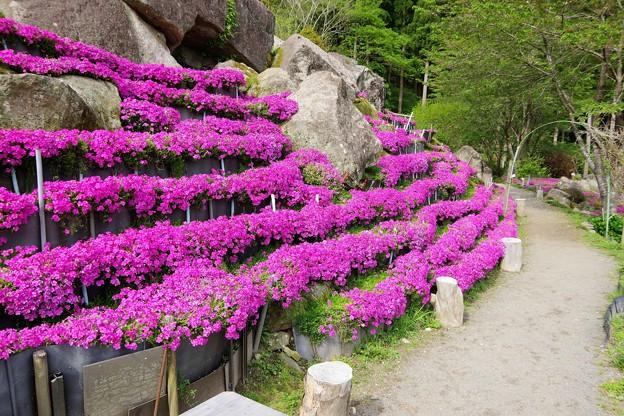 花の森 b