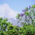 Photos: 今日の桜島