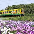 Photos: 肥薩おれんじ鉄道