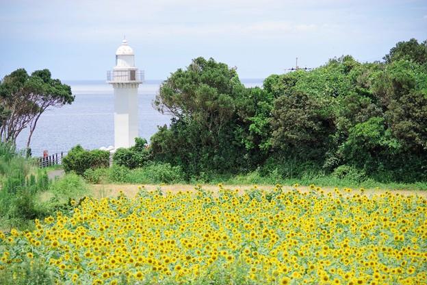 灯台とヒマワリ