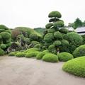 Photos: 西郷恵一郎庭園