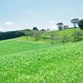 おお牧場は緑