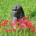 Photos: 田の神様 1