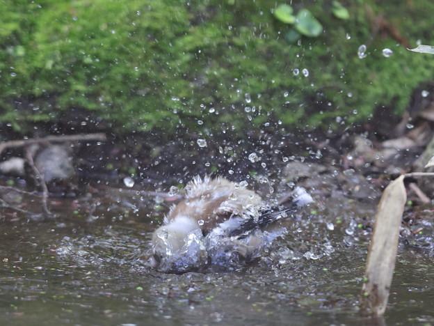 210409-16シメの水浴び