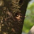 Photos: ア210407-2巣穴から掘った巣材を放出(2/3)