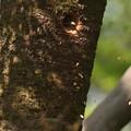 Photos: ア210407-3巣穴から掘った巣材を放出(3/3)