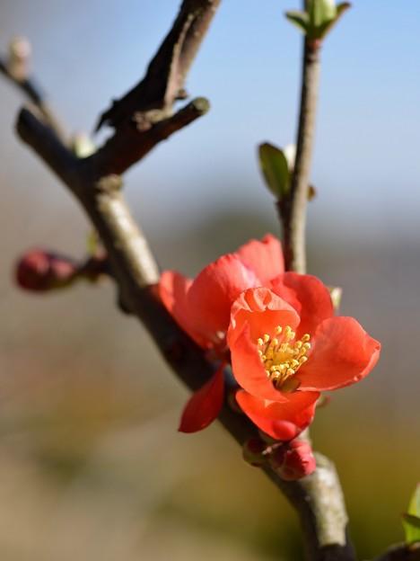 Photos: 春の朱色