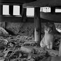 Photos: 縁の下の猫