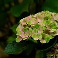 Photos: 緑とピンク