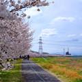 Photos: 稲城北緑地公園 桜