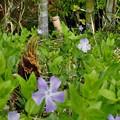 雑草地帯のタケノコ