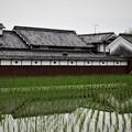 Photos: 農家と水田(2)