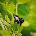 Photos: 昆虫の楽園(1)