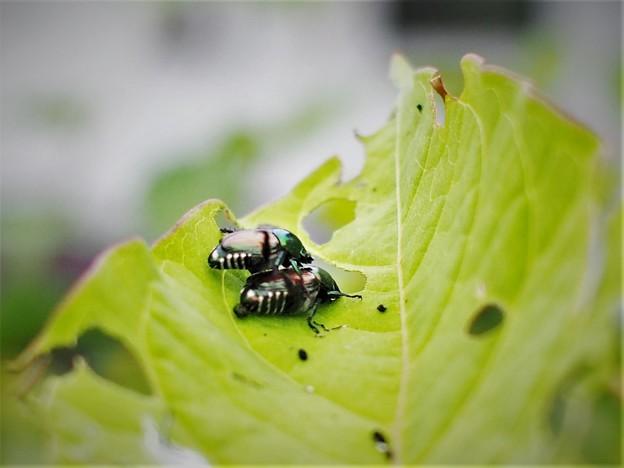 Photos: 昆虫の季節(2)