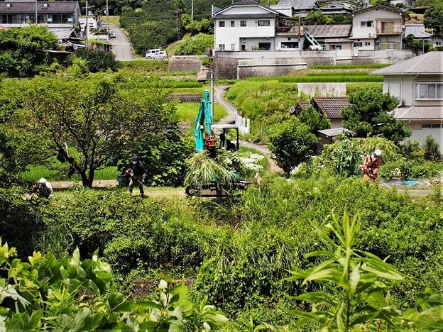 草刈り作業(1)