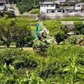 Photos: 草刈り作業(1)