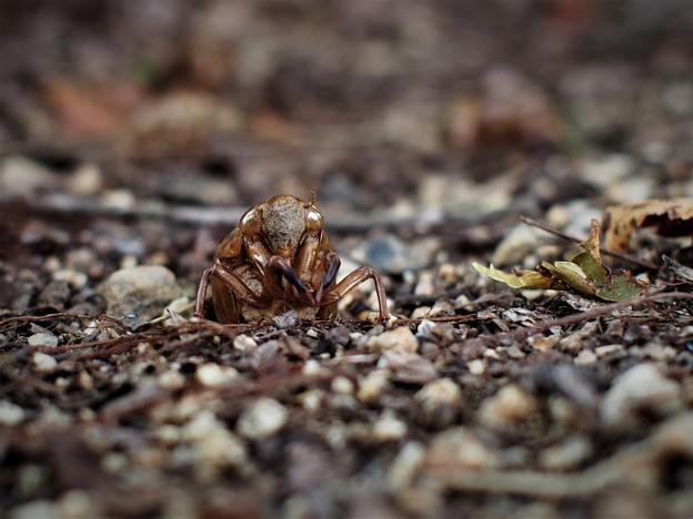 地上へ(蝉の幼虫)1