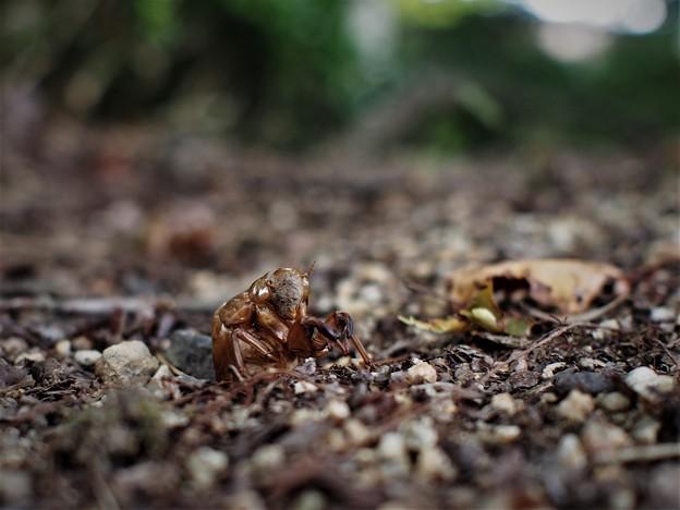 地上へ(蝉の幼虫)2