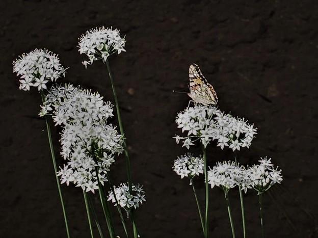 白い花にリボン