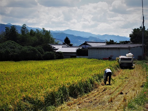 Photos: 収穫(1)