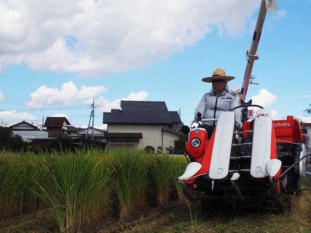 収穫(2)