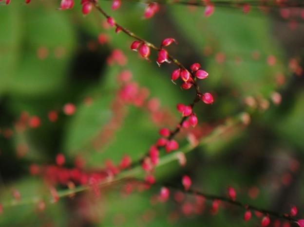 水引の花(2)