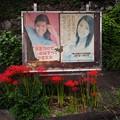 Photos: 彼岸花と掲示板
