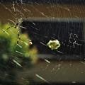女郎蜘蛛の獲物