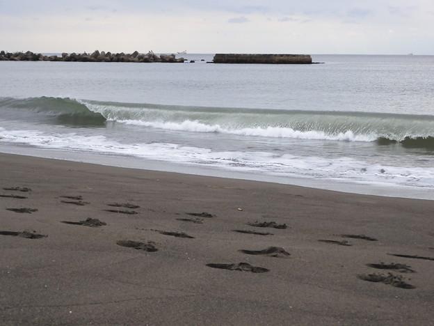波がペラっとなっているのが取りたかった