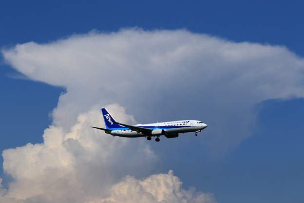 Boeing 737-800 ANA 夏の雲