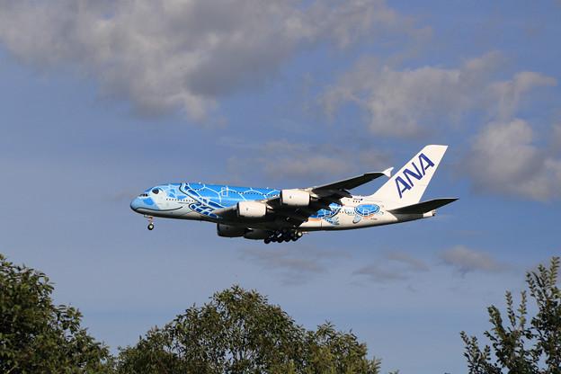 A380 ANA JA381A approach 2