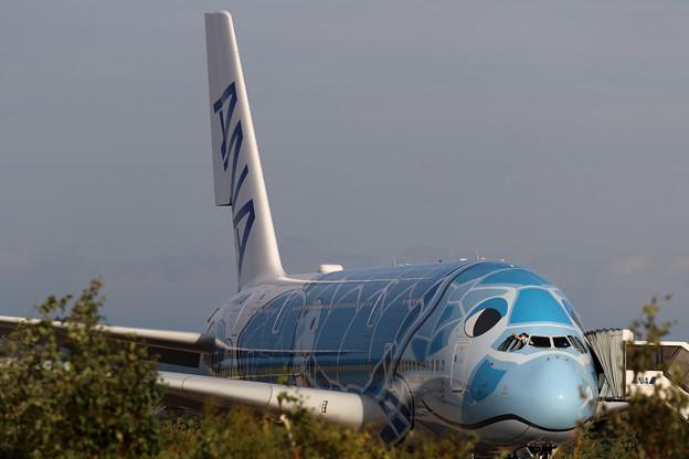 A380 ANA JA381A  遊覧飛行終了
