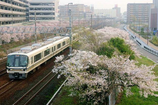 桜と221系