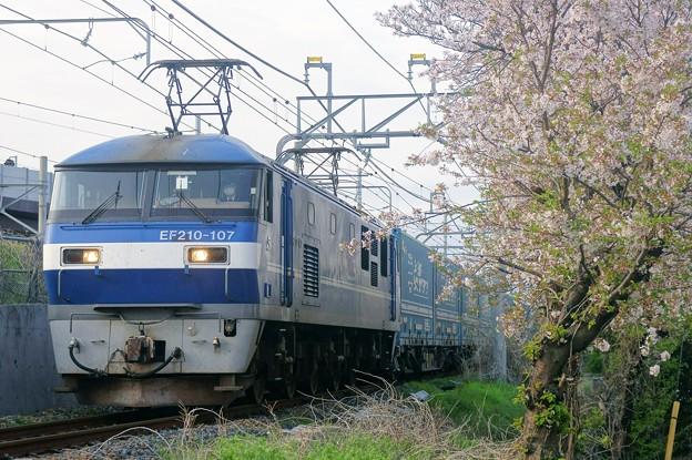 臨8056レ【EF210-107牽引】