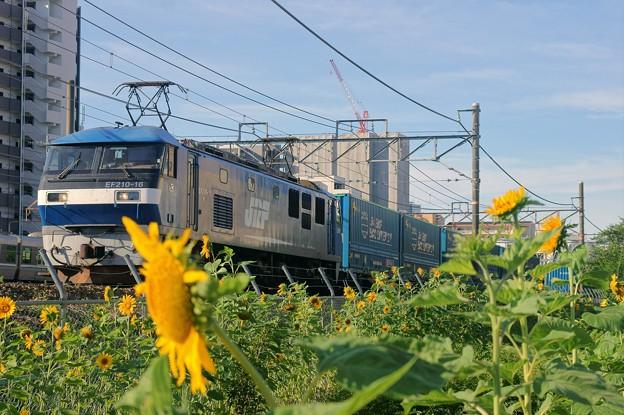 臨8056レ【EF210-16牽引】
